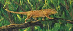 cat shrew from neocene