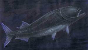 Ichthyophyseter from neocene