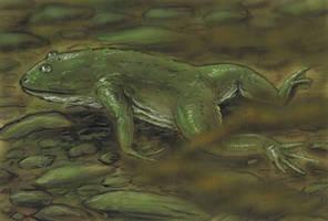 Baikal lungless frog by AlexSone