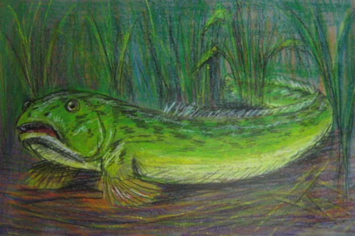 European snakefish