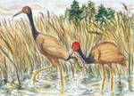red-headed craner