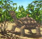 Armour-clad tortoise