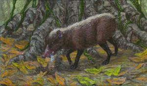 pig-snouted tenrec