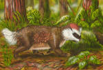 New Zealand pseudobadger