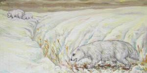 Greenland geopossum
