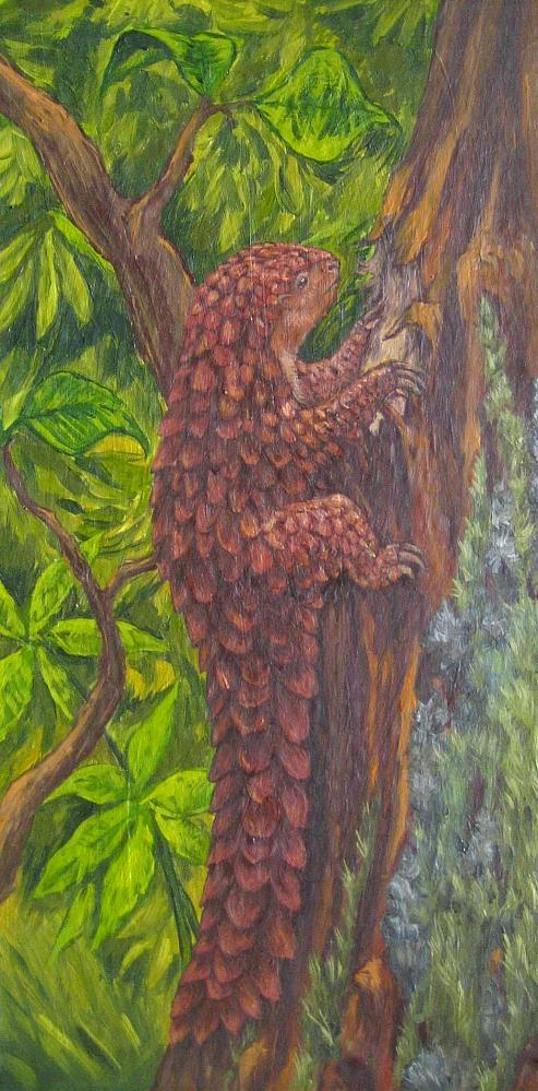 Tree micropangola, walking pinecone