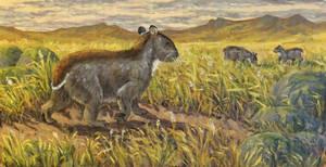Falkland xenolagus