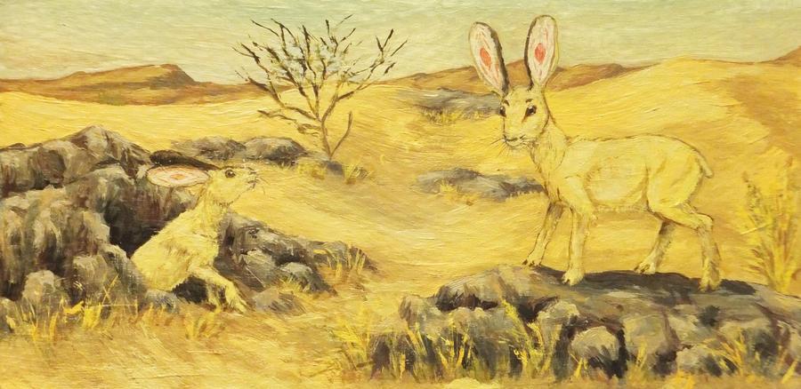Desert Australian rabbit