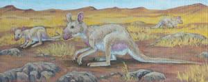 Bladdernose Kangaroo (Rhinoroo desertus)