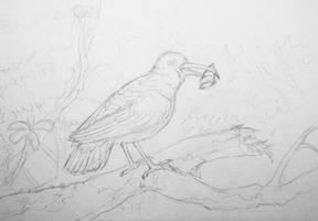 Hawaiian hook-beak sketch