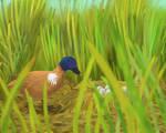 Cuckoo paradise duck (Paradisanas parasitica) fem