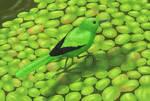 Duckweed-running wagtail (Dromotacilla lemnodroma)