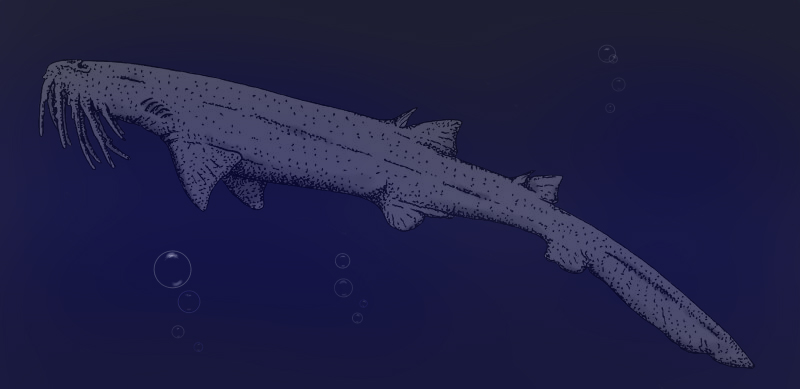 Long-wattled Ghost-shark colorized