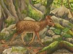 Saber-toothed deer (Odontotragus smilodonidens)