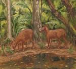 Long-toothed deer (Odontotragus babyrousoides)