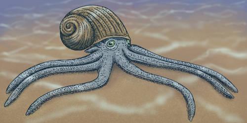 Hermit octopus (Diogenopus vermisomus)