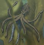 Monkey octopus (Platytentaculum acrobaticus)