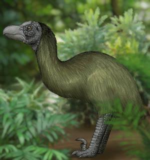 Yagil (Carnocasuarius yagil)