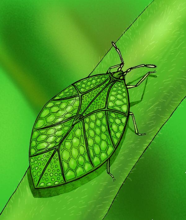 Giant lace bug