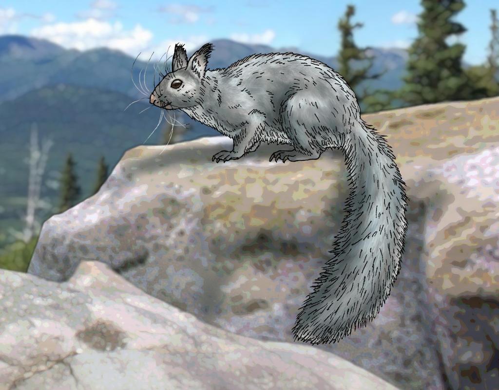 Beringean mountain squirrel(Tamiasciurus beringea)