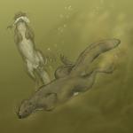 Otter dormouse (Glirolutra hamiota)
