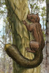Floridian giant squirrel