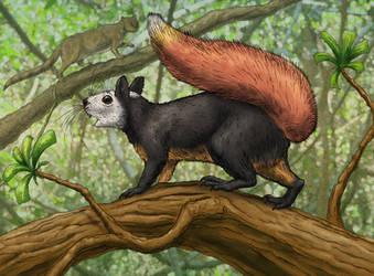 Flame-tailed squirrel(Callurosciurus flammeocauda