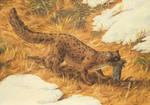 Ruinous dormouse (Raptoglis oviraptor)