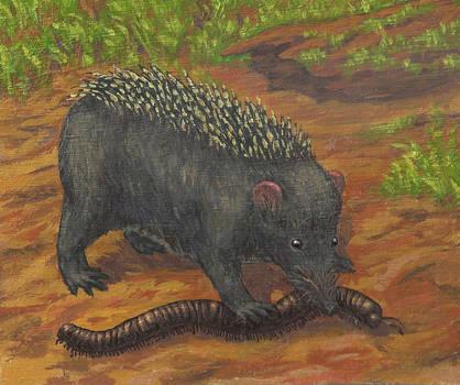 Mountain shrew-like hedgehog