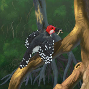 Mangrove woodpecker (Thalassopicus mangrophilus)