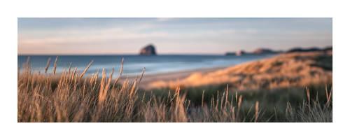 Beach Grass by sirgerg
