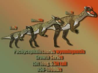 Pachycephalosaurus Growth Series by Davidy12