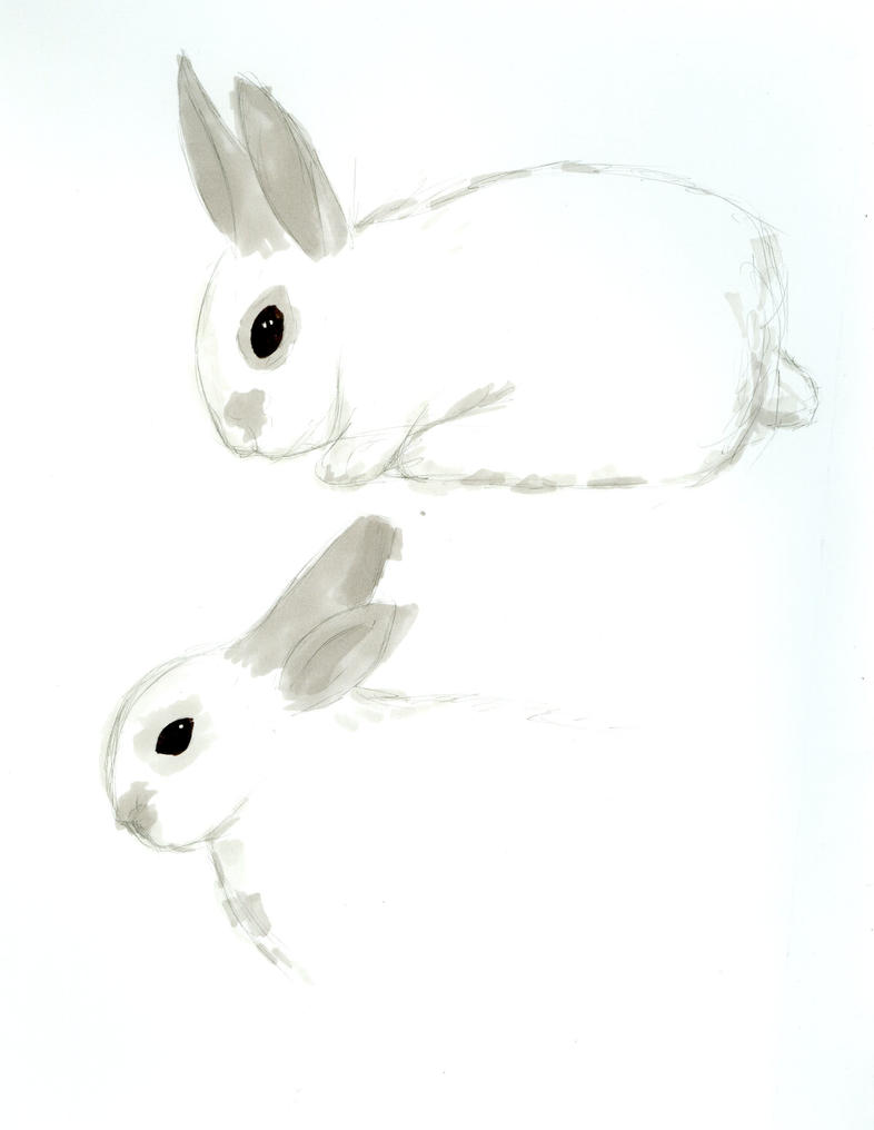 Rabbit by Bristolianharpie