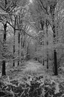 The Winter Path by AKrukowska