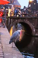 Blue Heron in Amsterdam by AKrukowska
