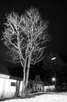 White Tree by AKrukowska