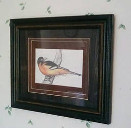 Bird Drawing (Framed)
