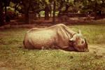 Vanilla Rhino