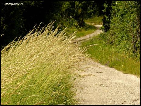 Bucolic path