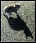 Little Cat Big Shadow