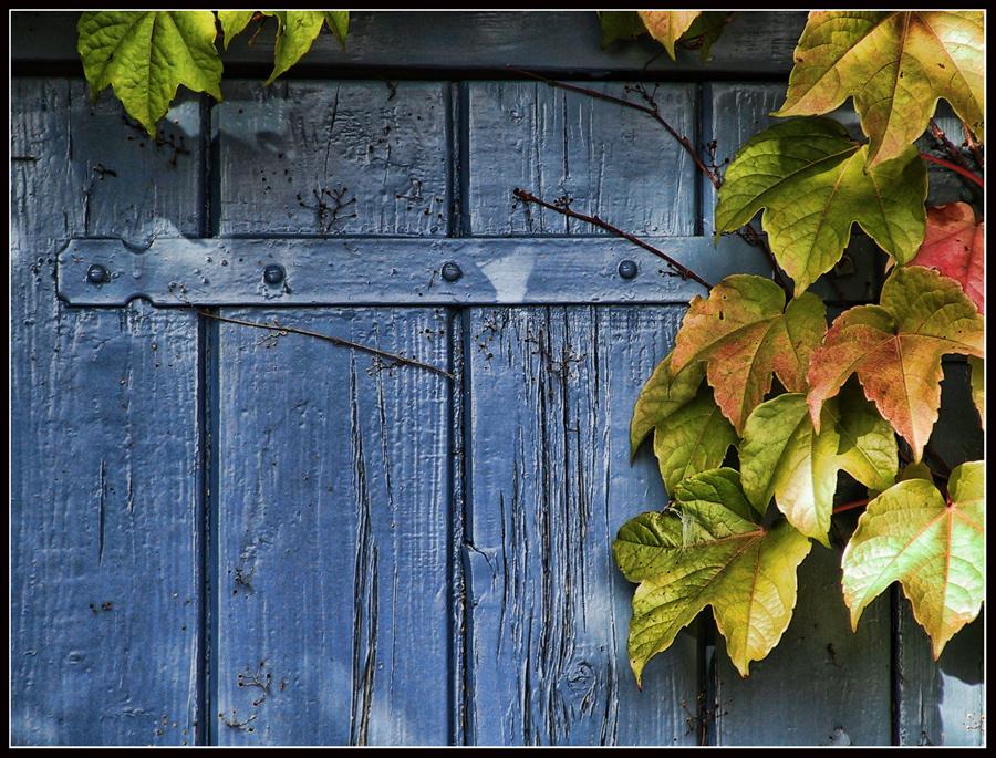 Autumn Door by kanes