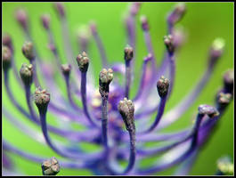 Purple Tentacles by kanes
