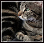 Compact Cat