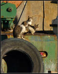 Cats in Harbour