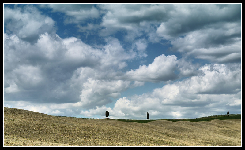Trees in Landscape by kanes