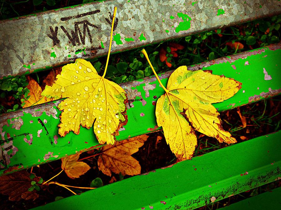 Autumn stripes by kanes