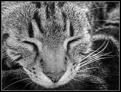 Nose Cat