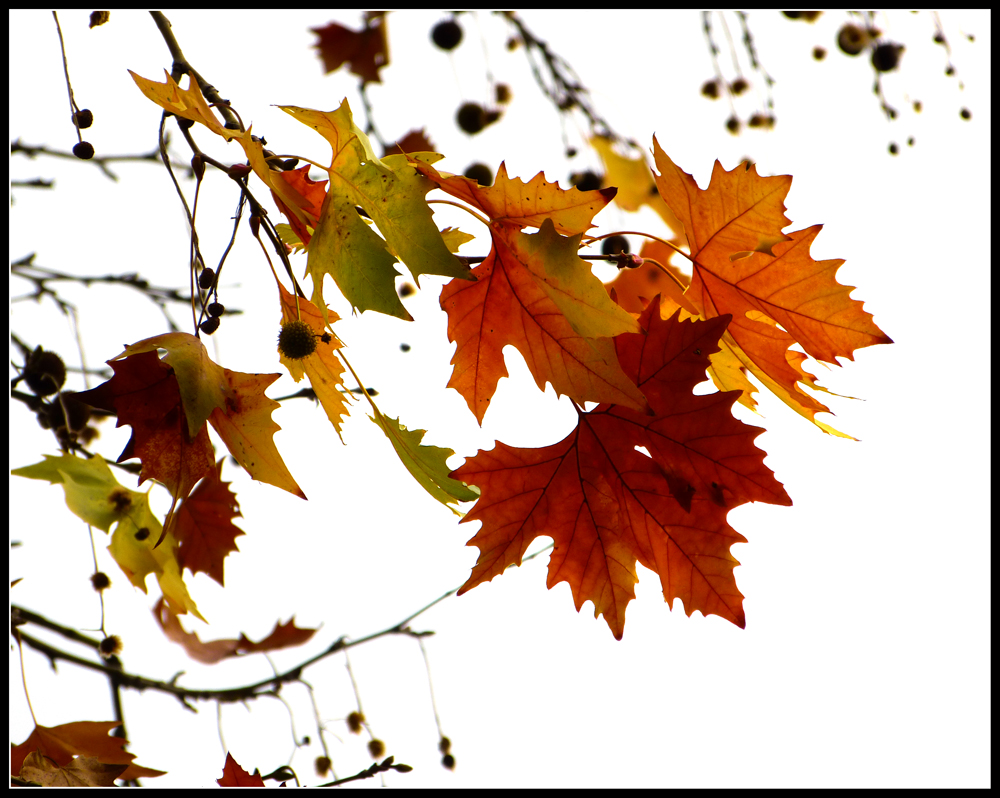 Autumn Strokes by kanes