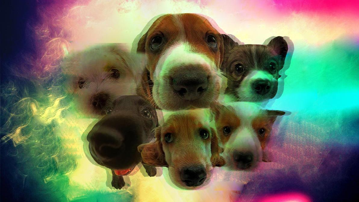 Service Dog Puppy Test