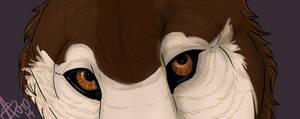 Zalla Eyeshot 3